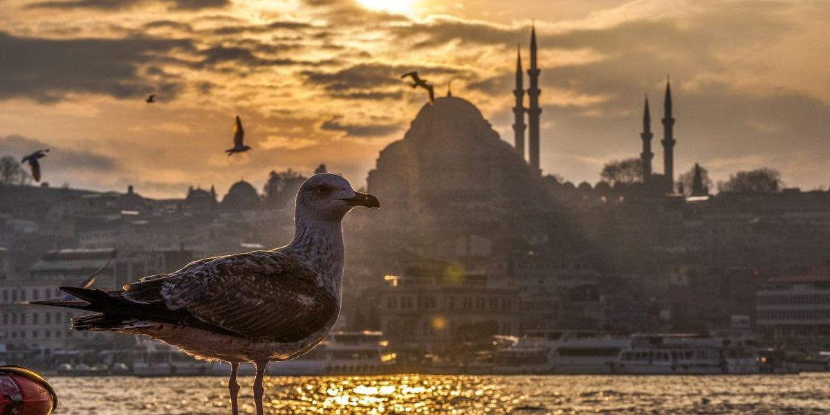 freight shipping to turkey